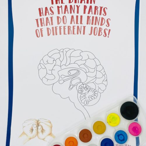 Poster: The brain has many parts that do all kinds of different jobs!